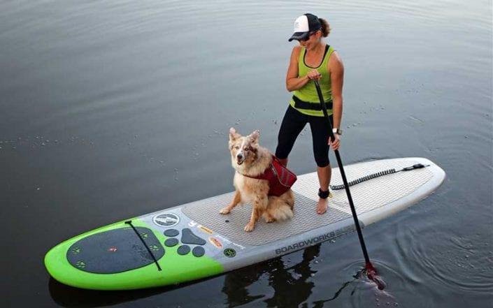 Dog Paddleboard and Kayak Gear Aqua Adventures San Diego